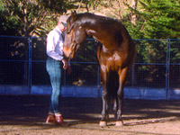 Horse psychology and behavior: equine educational courses by Herdword, New Zealand